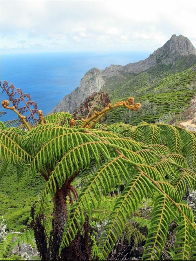 samambaia-gigante_ilha-da-trindade